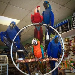 all macaw in one